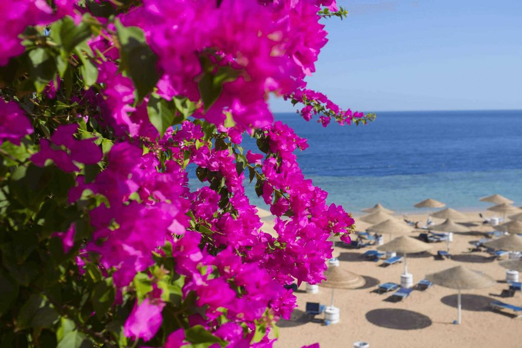 Everything about North Cyprus